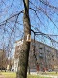 Birdhouses на деревьях во дворе стоковые фото