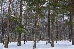Birdhouses for birds in the trees in the winter forest Royalty Free Stock Photography