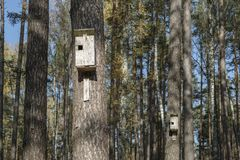Birdhouses in forest Royalty Free Stock Photos
