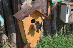 Birdhouses, houses for birds Stock Photo