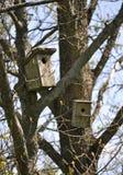 Birdhouses nella foresta Fotografia Stock Libera da Diritti
