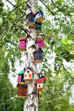 Birdhouses on a tree. Many colorful little birdhouses hanging on a green tree Stock Photos
