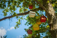 Birdhouses on tree Royalty Free Stock Photography