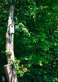 birdhouses on tree trunk to help the animals Stock Photo