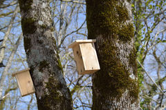 Birdhouses on the trunks Royalty Free Stock Image