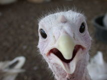 birdie έκπληξη Στοκ φωτογραφία με δικαίωμα ελεύθερης χρήσης