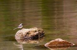 Birdie Stock Photo