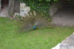 birdie images libres de droits