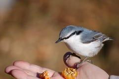 Birdie. Stock Images