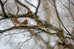 birdie Stockfoto