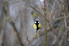 birdie Stockfotos