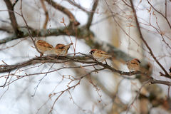 birdie Lizenzfreie Stockfotos