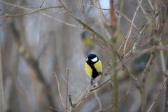 birdie Images stock