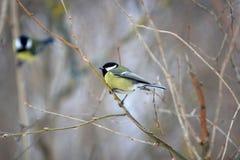 birdie Stockbilder