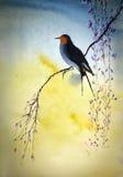 birdie Fotografia Stock