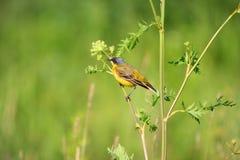 Birdie Stock Photography