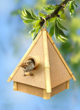 Birdie and birdhouse Stock Image