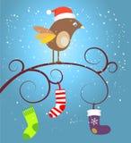 Birdie at Christmas Stock Photos