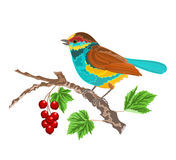 Birdie on the currant. Vector illustration without gradients Royalty Free Stock Photography
