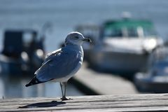 Birdie Stock Image