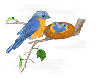 Birdie and little birds in the nest. Vector illustration without gradients royalty free illustration