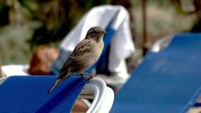 Birdie sur la plage image stock