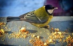 Birdie Royalty Free Stock Photo