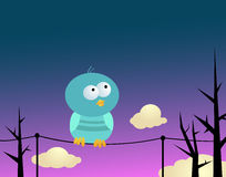Birdie on wires. Funny little bird sitting on wires against evening background Stock Photo