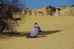 Birdies Stock Photo