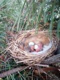 Birdies. Brown nest nature baby stock photos