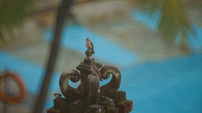 Birdies on the elements of Hindu architecture stock video footage