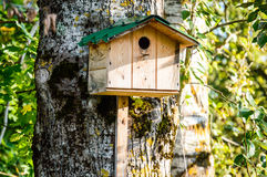 The birdies house Royalty Free Stock Images