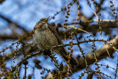 Birding που κοιτάζει επάνω Στοκ Εικόνες
