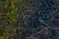 Birding stock images