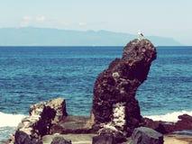 Birding bij Canarische Eilanden royalty-vrije stock afbeeldingen