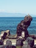 Birding bij Canarische Eilanden royalty-vrije stock afbeelding