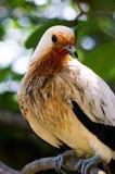 Birding Royalty Free Stock Image
