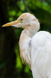 Birding. Bird's portrait took with NEX-6 & Minolta 75-300mm royalty free stock images