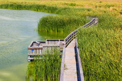 Birding Boardwalk Royalty Free Stock Images