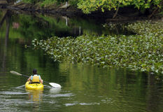 Birding. Karenna Snow, of the Rancocas Conservancy Brown Creekers kayaks in Mount Holly Saturday during the World Series of Birding stock photos