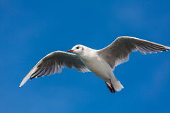 Birding of the sea. View of birding of the bodensee royalty free stock photography