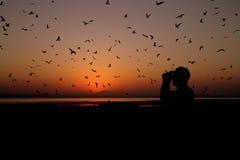 Birding at sunset Stock Photos