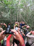 Birding tour groups photographing Sifaka's in Madagascar royalty free stock photography