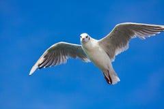 Birding van het overzees royalty-vrije stock afbeeldingen