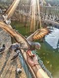 Birdland stock foto