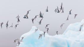 Birdlife in Jokulsarlon, a large glacial lake in Iceland Royalty Free Stock Image