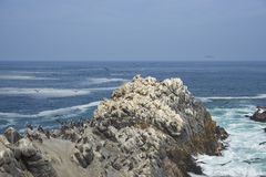 Birdlife on the Pacific Coast of Chile stock photography