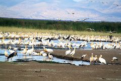 Birdlife in Tanzania royalty free stock photo