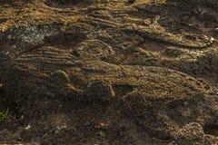 Birdman petroglif, Wielkanocna wyspa, Chile Zdjęcie Royalty Free