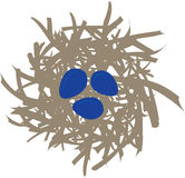 Birdnest with 3 Blue Eggs. Tan bird nest with three blue eggs Stock Photo